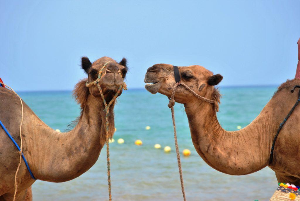 CamelConversation