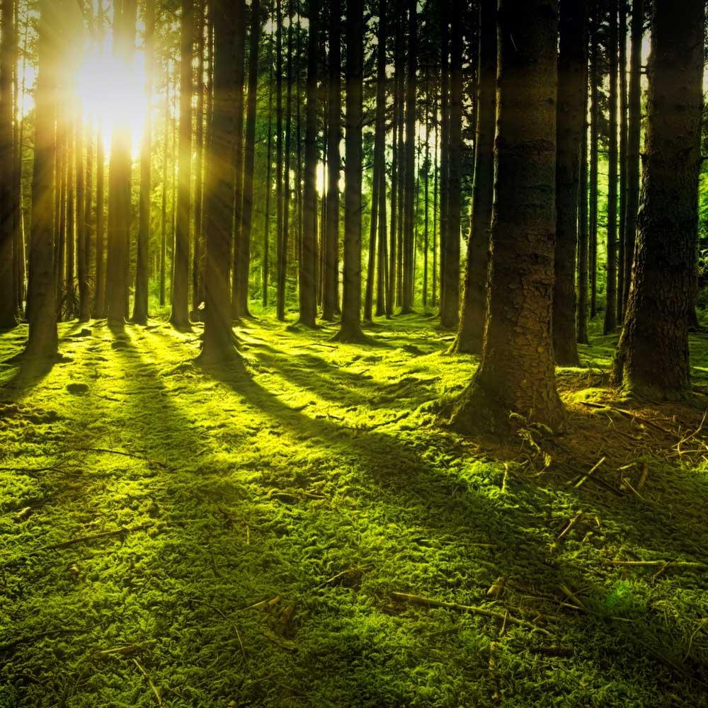 Sunset-Rain-Forest